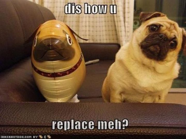 "101 Cute Pug Memes - ""Dis how u replace meh?"""