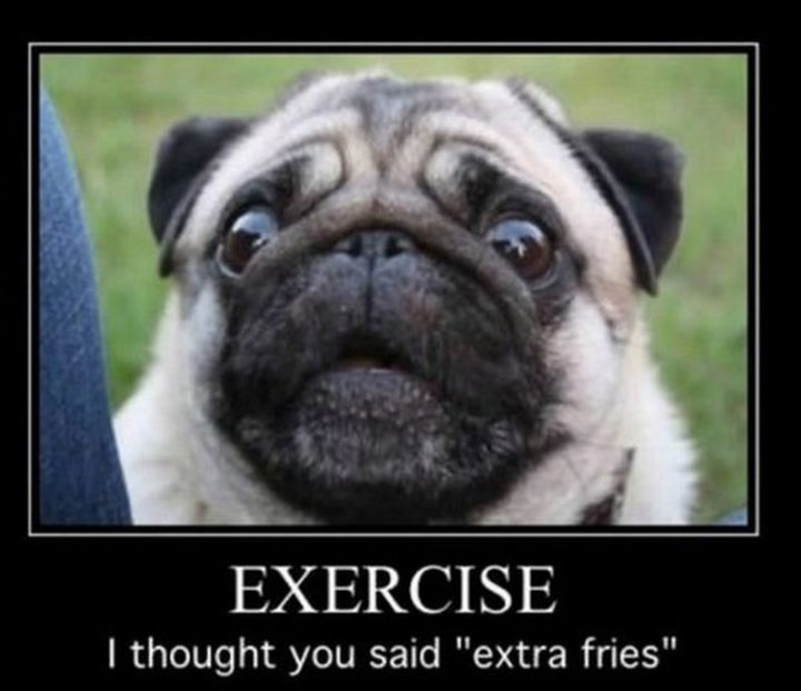 "101 Cute Pug Memes - ""Exercise. I thought you said 'extra fries'."""