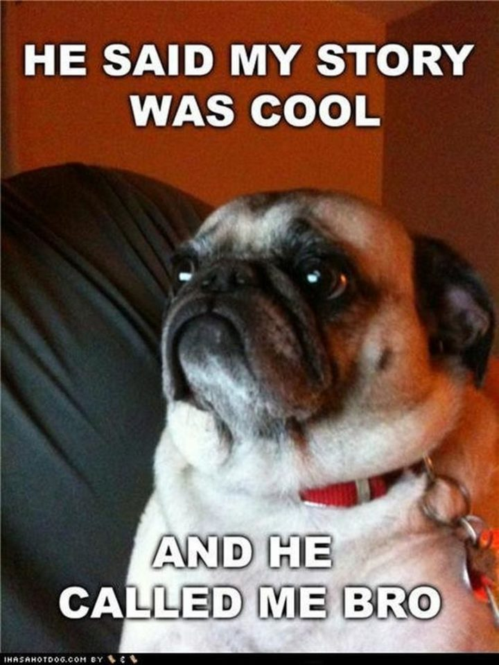 "101 Cute Pug Memes - ""He said my story was cool and he called me bro."""