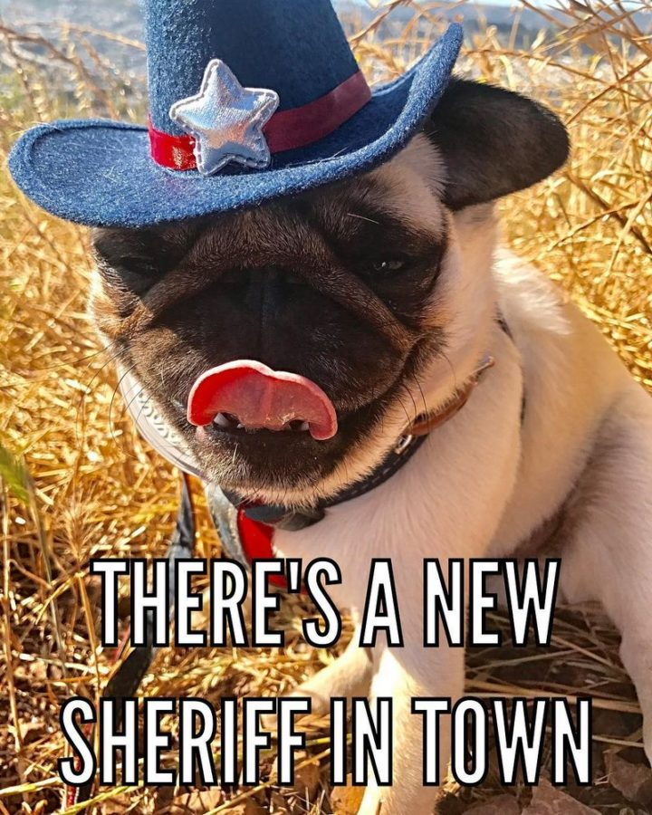"101 Cute Pug Memes - ""There's a new sheriff in town."""
