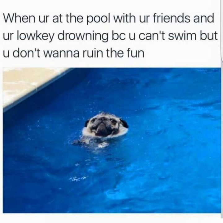 "101 Cute Pug Memes - ""When ur at the pool with ur friends and ur lowkey drowning bc u can't swim but u don't wanna ruin the fun."""