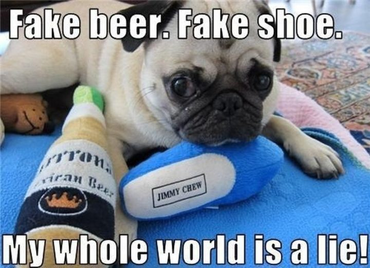 "101 Cute Pug Memes - ""Fake beer. Fake shoes. My whole world is a lie!"""
