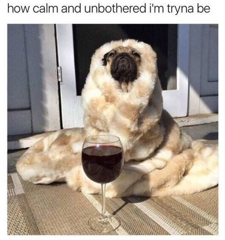 "101 Cute Pug Memes - ""How calm and unbothered I'm tryna be."""