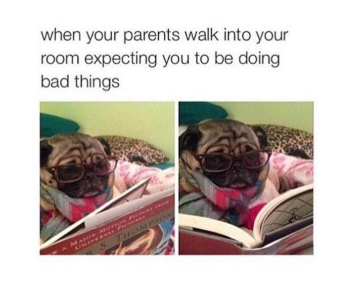 "101 Cute Pug Memes - ""When your parents walk into your room expecting you to be doing bad things."""