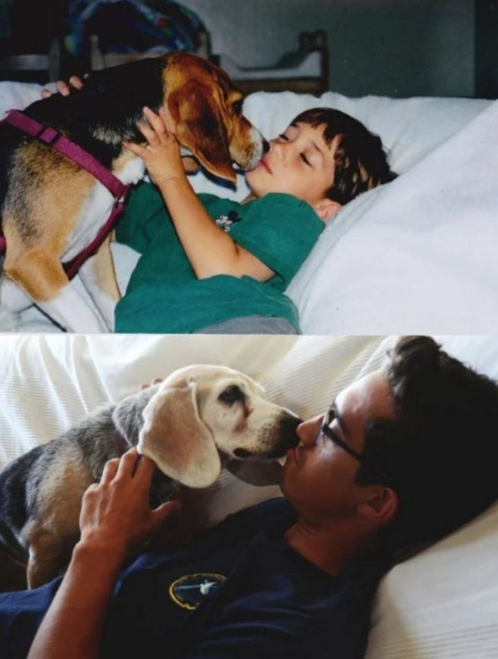 "35 Then and now pictures - ""My Beagle turned 16 today. Had her since she was born."""