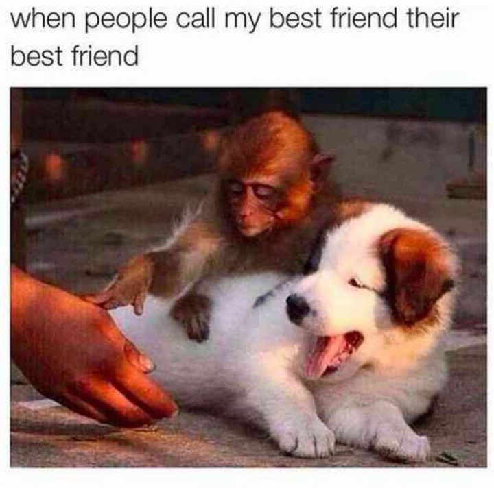 "65 Funny Friend Memes - ""When people call my best friend their best friend."""
