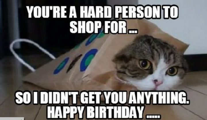 101 Funny Cat Birthday Memes -