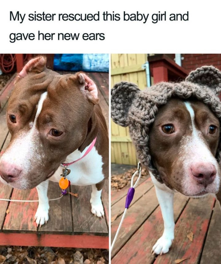 "55 Cute Dog Posts - ""My sister rescued this baby girl and gave her new ears."""