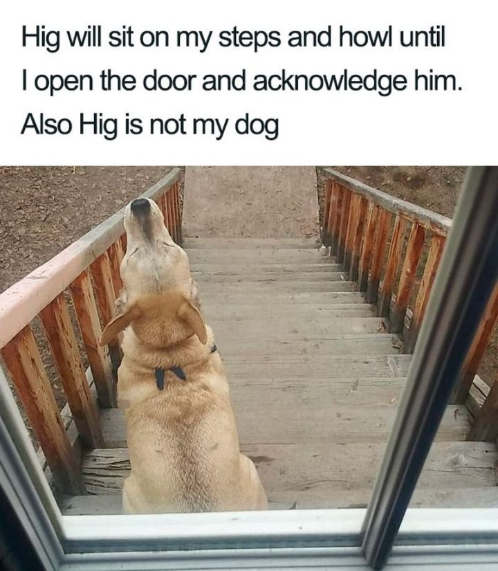 "55 Cute Dog Posts - ""Hig will sit on my steps and howl until I open the door and acknowledge him. Also, Hig is not my dog."""