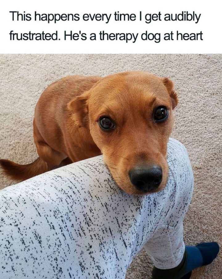 "55 Cute Dog Posts - ""This happens every time I get audibly frustrated. He's a therapy dog at heart."""