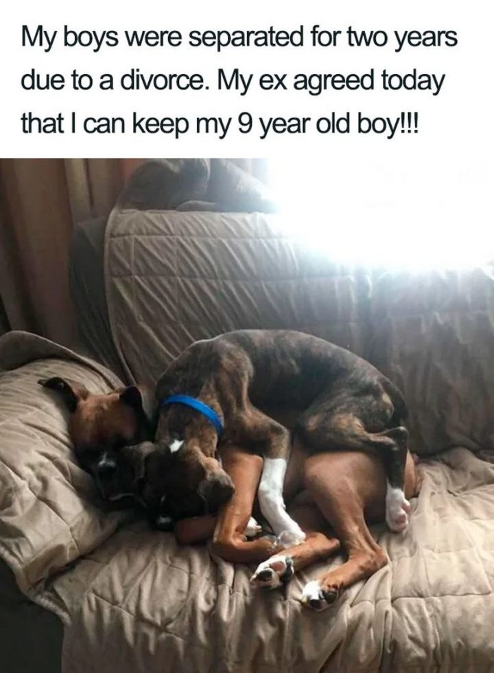 "55 Cute Dog Posts - ""My boys were separated for two years due to a divorce. My ex agreed today that I can keep my 9-year-old boy!!!"""