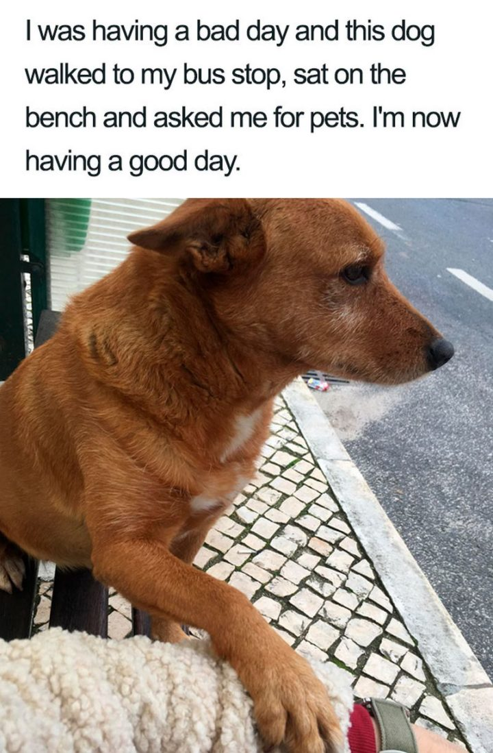 "55 Cute Dog Posts - ""I was having a bad day and this dog walked to my bus stop, sat on the bench and asked me for pets. I'm now having a good day."""