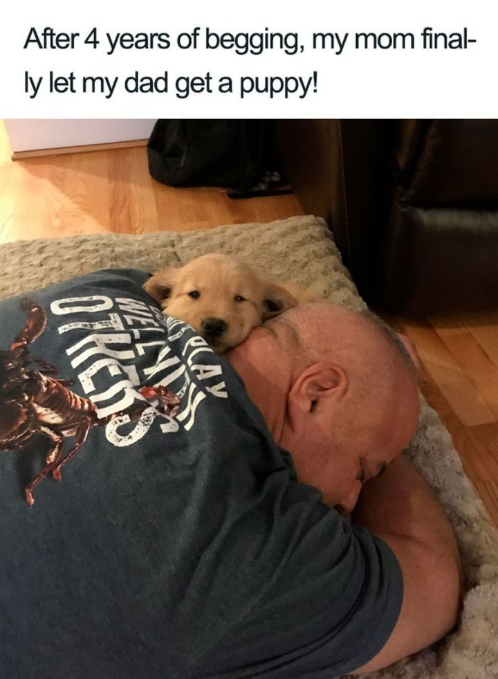 "55 Cute Dog Posts - ""After 4 years of begging, my mom finally let my dad get a puppy!"""