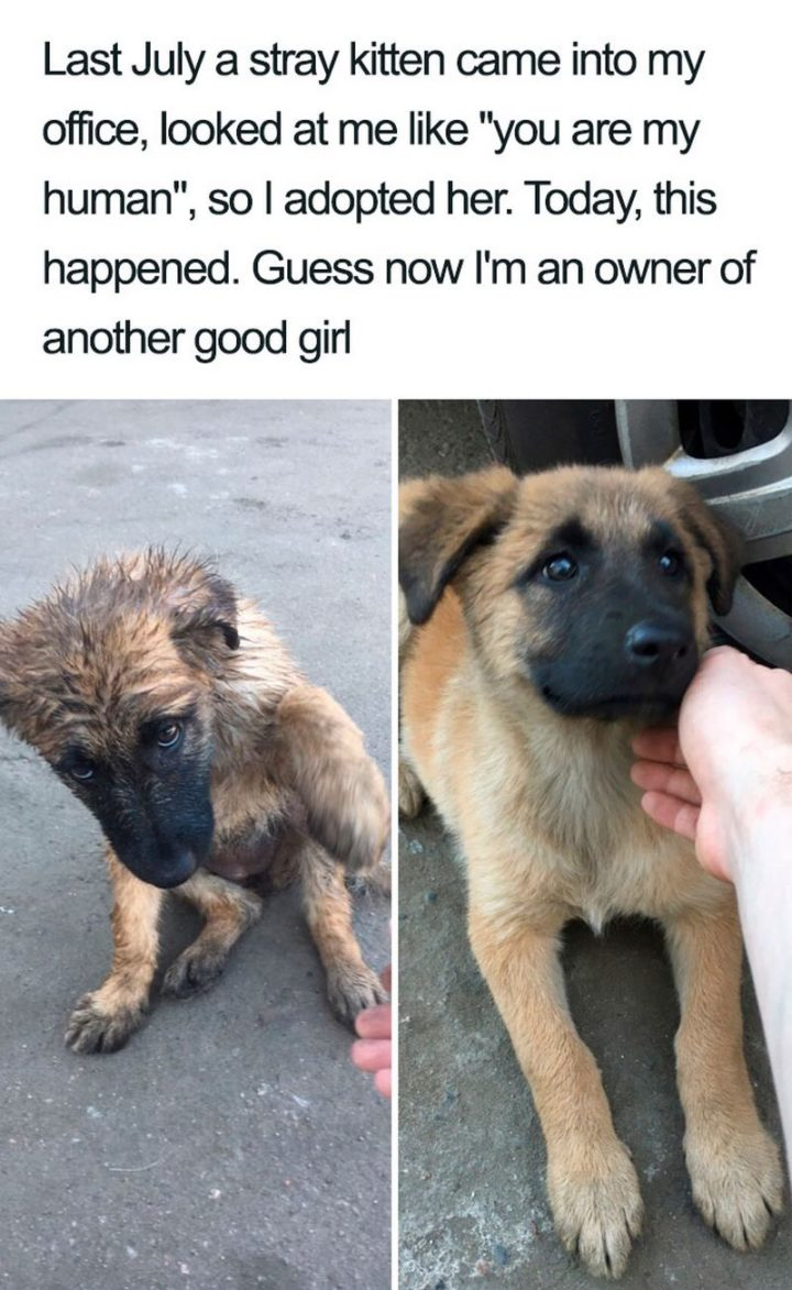 "55 Cute Dog Posts - ""Last July a stray kitten came into my office, looked at me like 'you are my human', so I adopted her. Today, this happened. Guess now I'm an owner of another good girl."""
