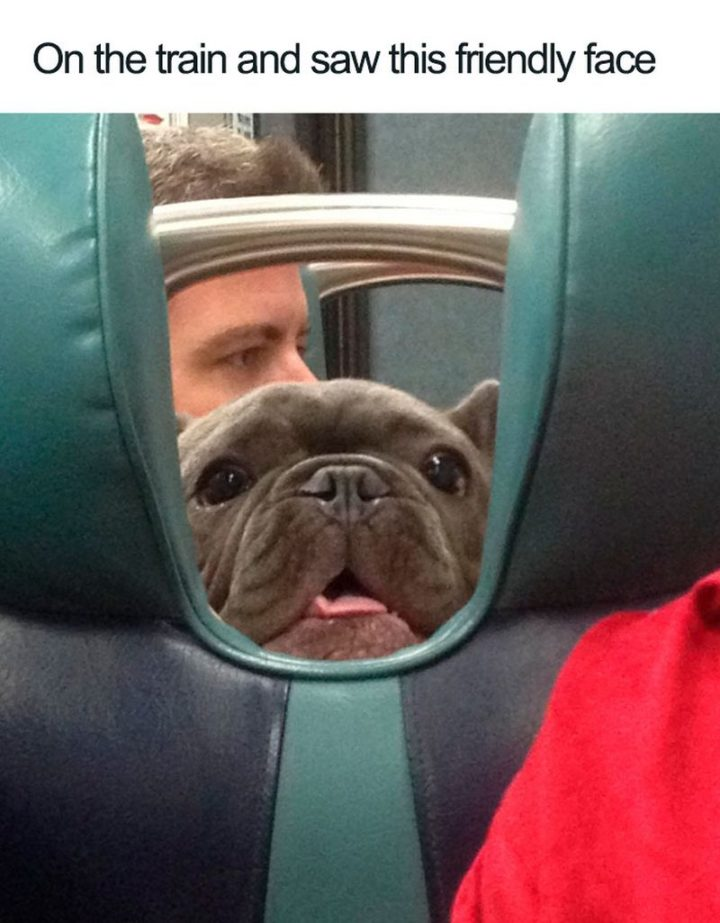 "55 Cute Dog Posts - ""On the train and saw this friendly face."""