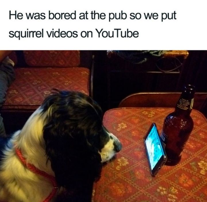 "55 Cute Dog Posts - ""He was bored at the pub so we put squirrel videos on YouTube."""