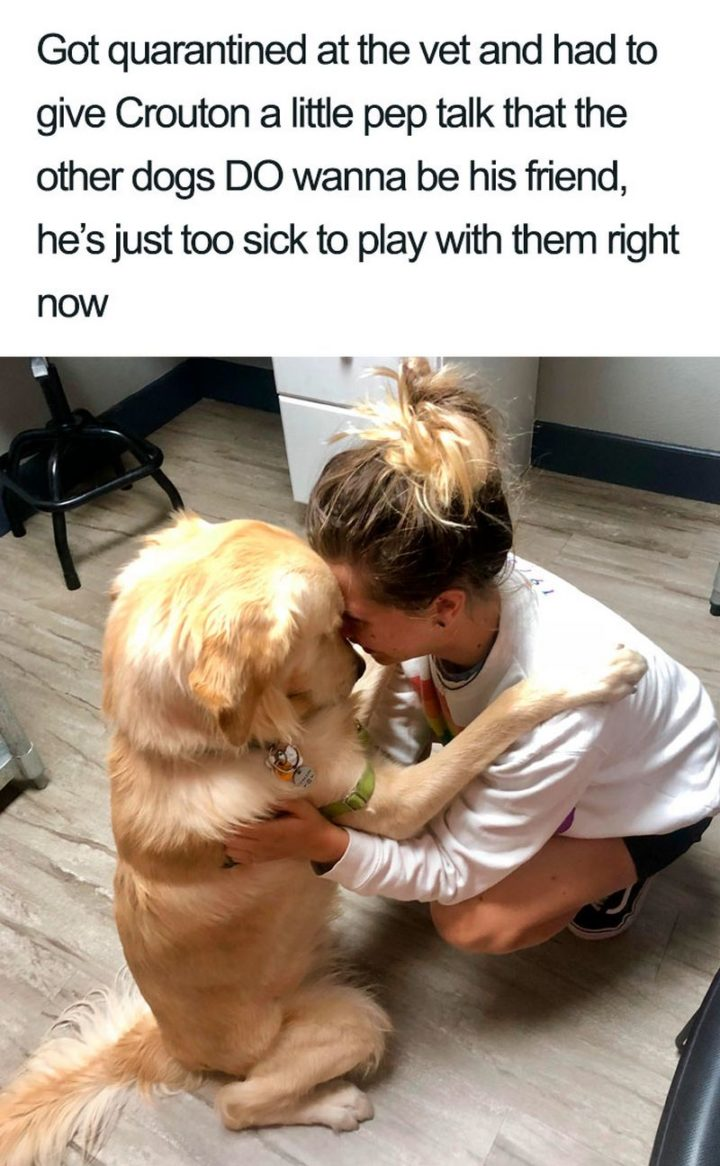 "55 Cute Dog Posts - ""Got quarantined at the vet and had to give Crouton a little pep talk that the other dogs DO wanna be his friend, he's just too sick to play with them right now."""