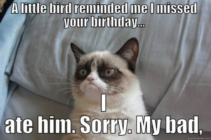 "85 Happy Belated Birthday Memes - ""A little bird reminded me I missed your birthday...I ate him. Sorry. My bad."""