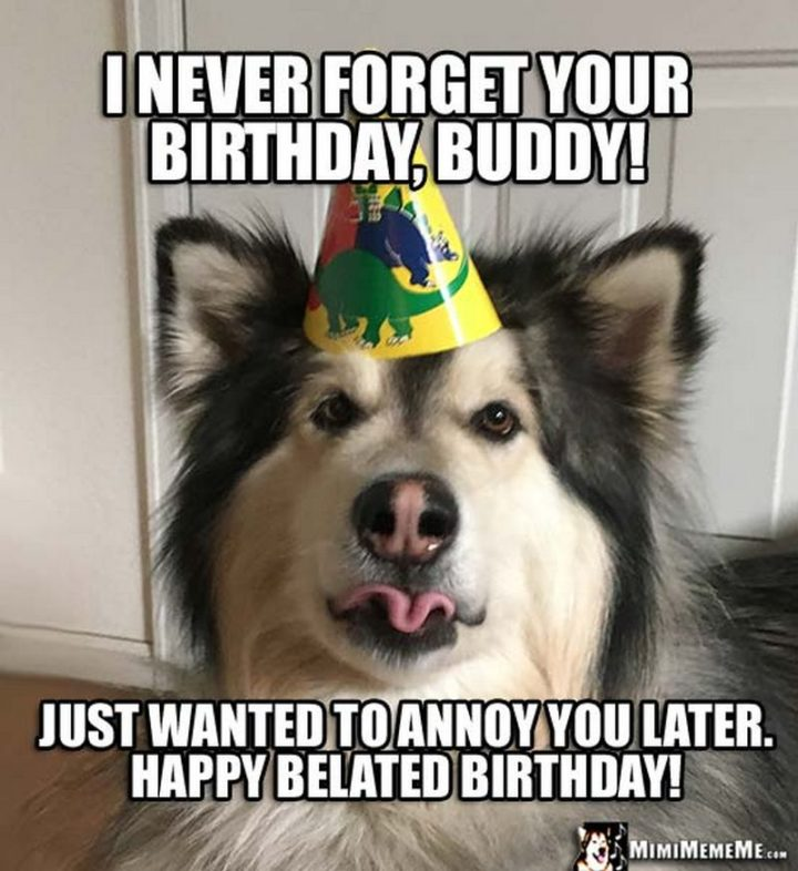 "85 Happy Belated Birthday Memes - ""I never forget your birthday, buddy! Just wanted to annoy you later. Happy belated birthday!"""