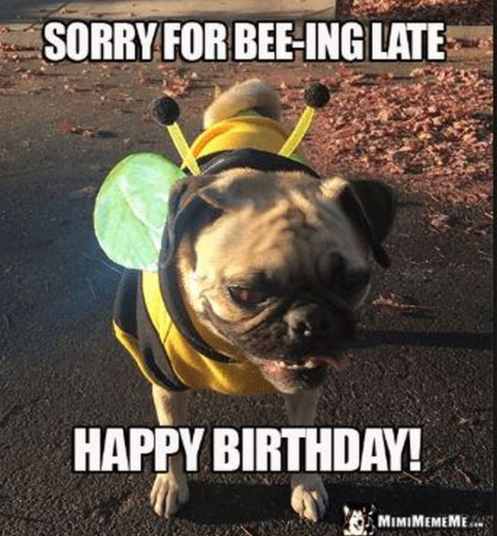 "85 Happy Belated Birthday Memes - ""Sorry for bee-ing late. Happy Birthday!"""