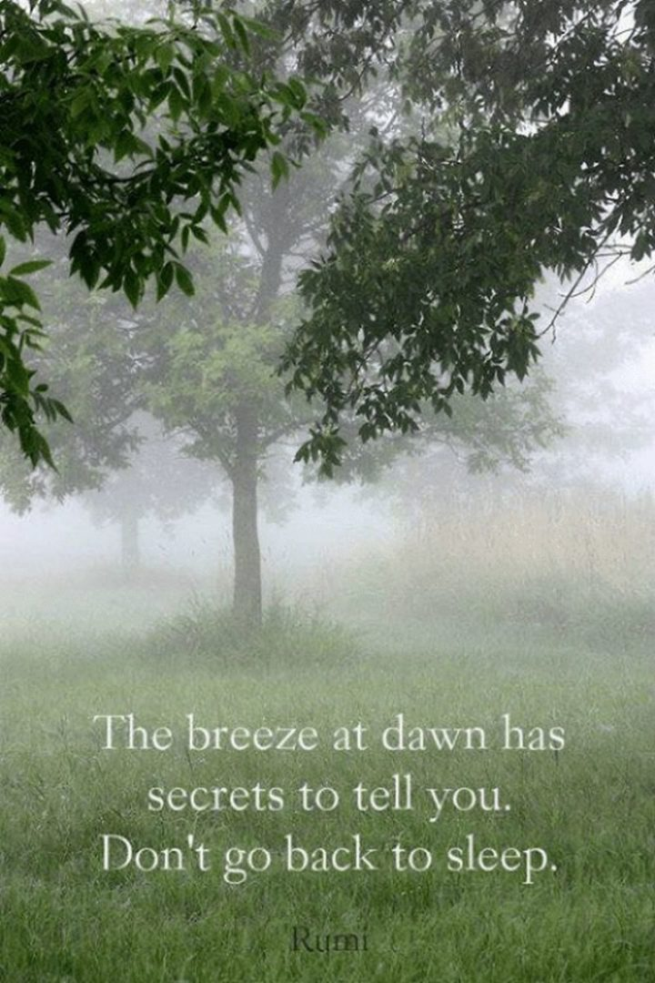 "45 Good Morning Quotes - ""The breeze at dawn has secrets to tell you. Don't go back to sleep."" - Rumi quotes"