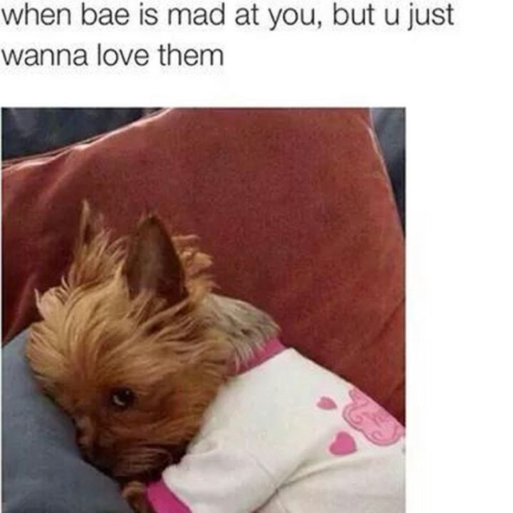"61 Boyfriend Memes - ""When bae is mad at you, but u just wanna love them."""