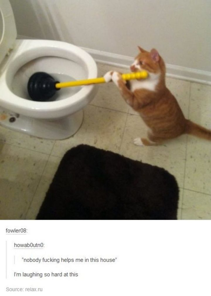 """61 Funny Clean Memes - """"Nobody f***ing helps me in this house. I'm laughing so hard at this."""""""