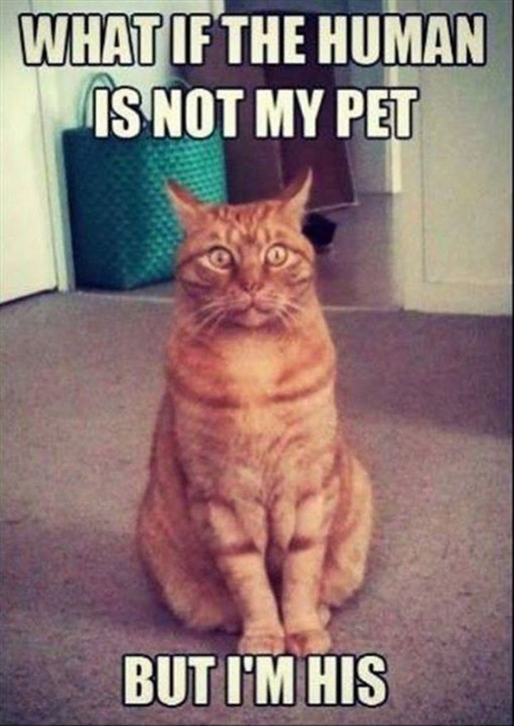 """61 Funny Clean Memes - """"What if the human is not my pet. But I'm his."""""""