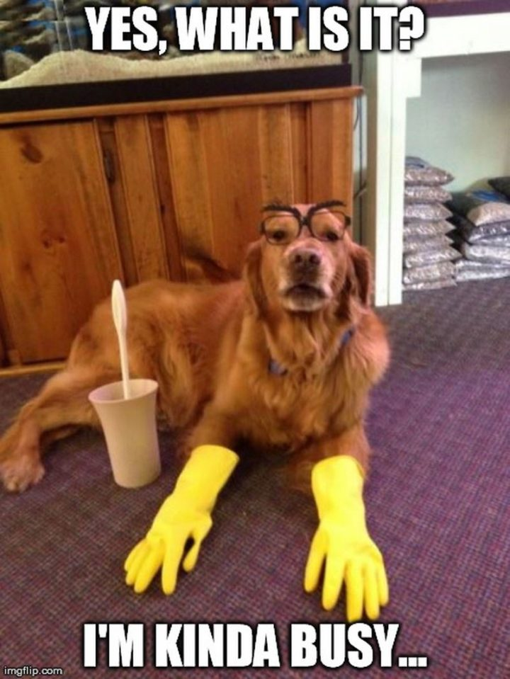 cleaning memes funny clean dog meme busy funniest cleaner window yes floor there kinda maid imgflip re animals laugh company