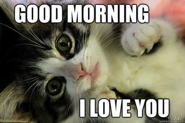 "55 Love Memes - ""Good morning. I love you."""