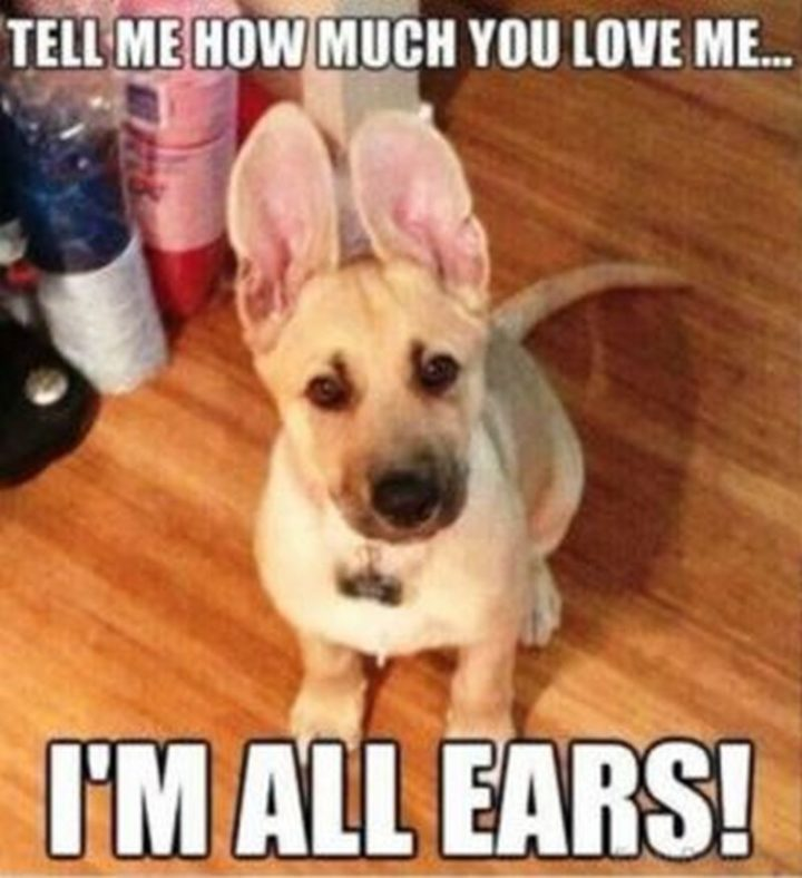 """Tell me how much you love me...I'm all ears!"""