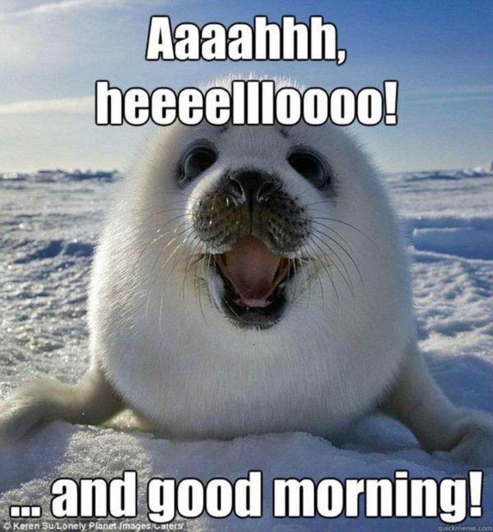 """101 Funny Good Morning Memes - """"Aaaahhh, heeeellloooo!...and good morning!"""""""