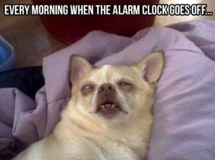 "101 Funny Good Morning Memes - ""Every morning when the alarm clock goes off..."""