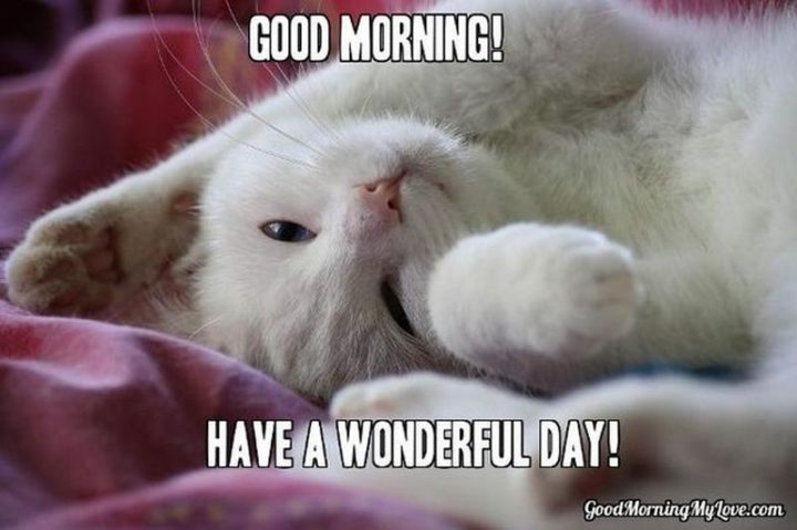 "101 Funny Good Morning Memes - ""Good morning! Have a wonderful day!"""
