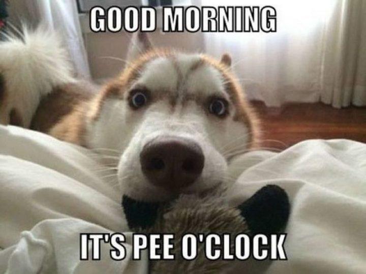"101 Funny Good Morning Memes - ""Good morning. It's pee o'clock."""