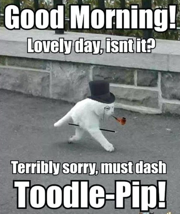"101 Funny Good Morning Memes - ""Good morning! Lovely day, isn't it? Terribly sorry, must dash toodle-pip!"""