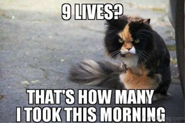 "101 Funny Good Morning Memes - ""9 lives? That's how many I took this morning."""
