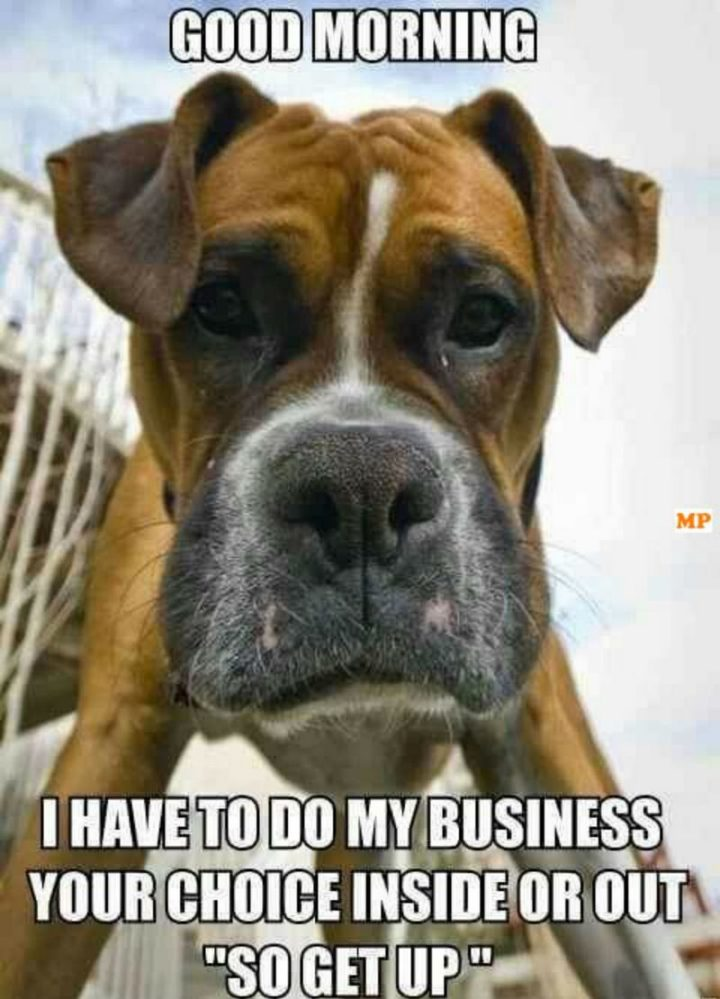 "101 Funny Good Morning Memes - ""Good morning. I have to do my business. Your choice inside or out 'so get up'."""