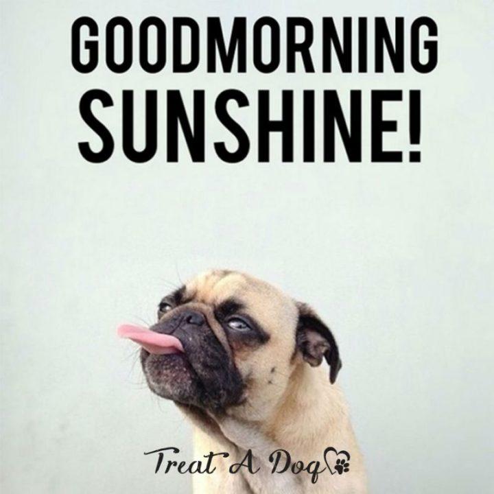 "101 Funny Good Morning Memes - ""Good morning sunshine!"""
