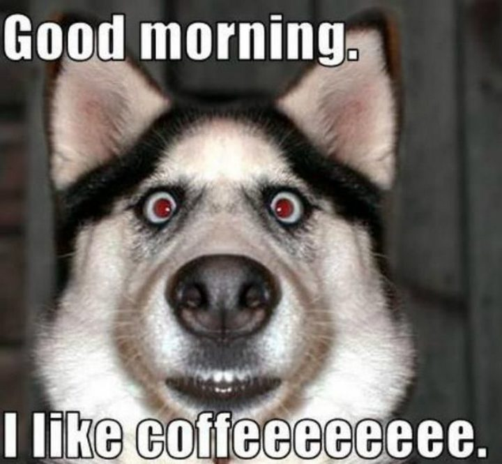 """101 Funny Good Morning Memes - """"Good morning. I like coffeeeeeeee."""""""