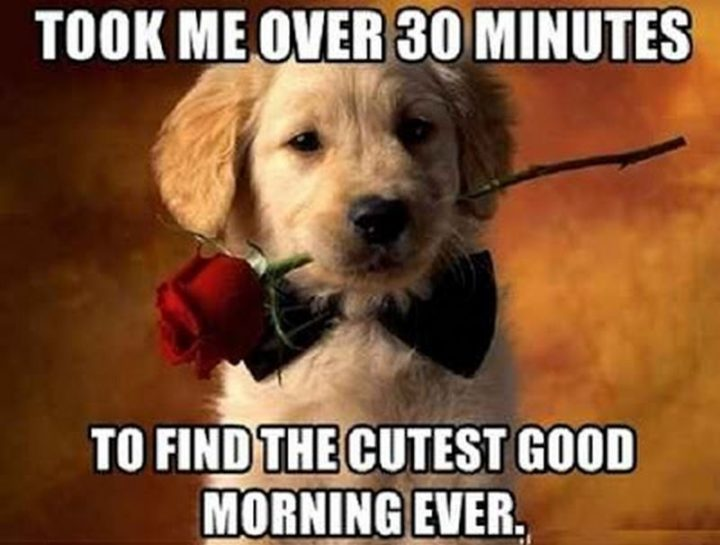 "101 Funny Good Morning Memes - ""Took me over 30 minutes to find the cutest good morning ever."""