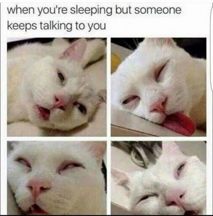 "101 Funny Good Morning Memes - ""When you're sleeping but someone keeps talking to you."""