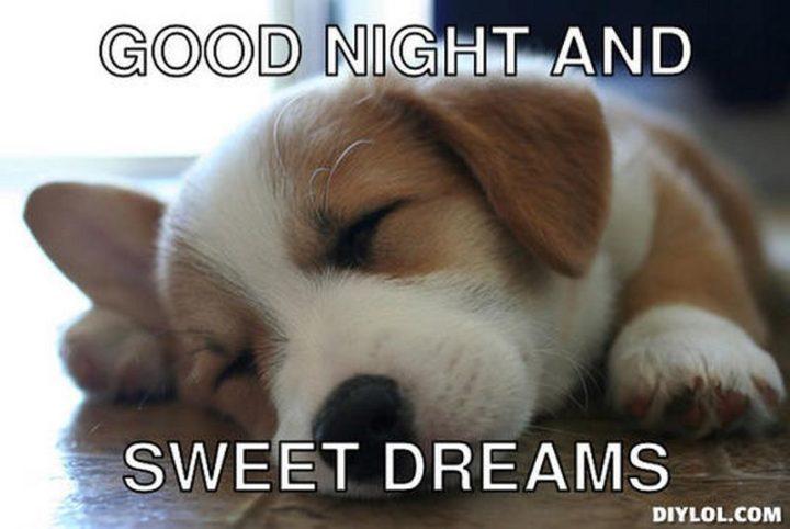 "101 Good Night Memes - ""Good night and sweet dreams."""