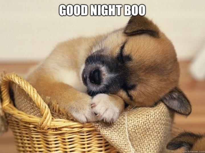 """101 Good Night Memes - """"Good night boo."""""""