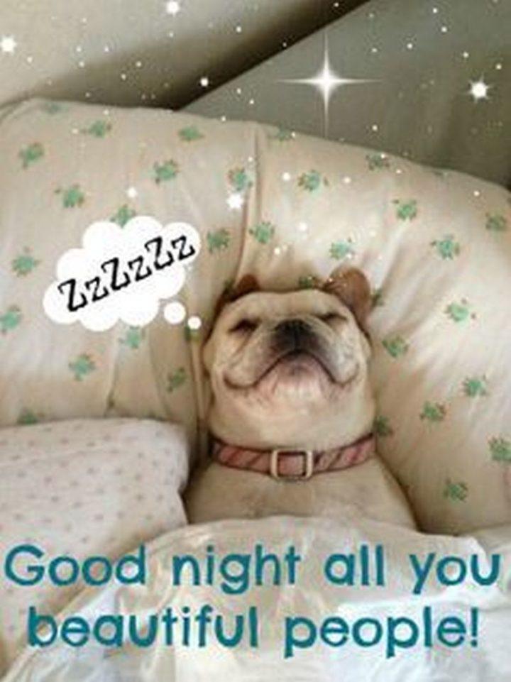 "101 Good Night Memes - ""ZzZzZz...Good night all you beautiful people!"""