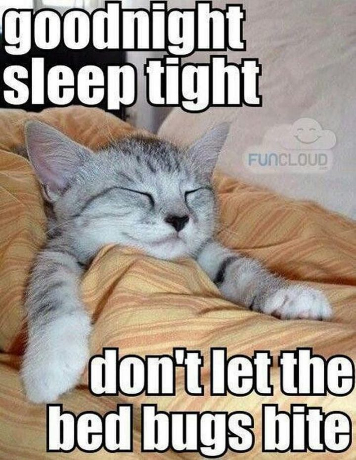 "101 Good Night Memes - ""Goodnight. Sleep tight. Don't let the bed bugs bite."""