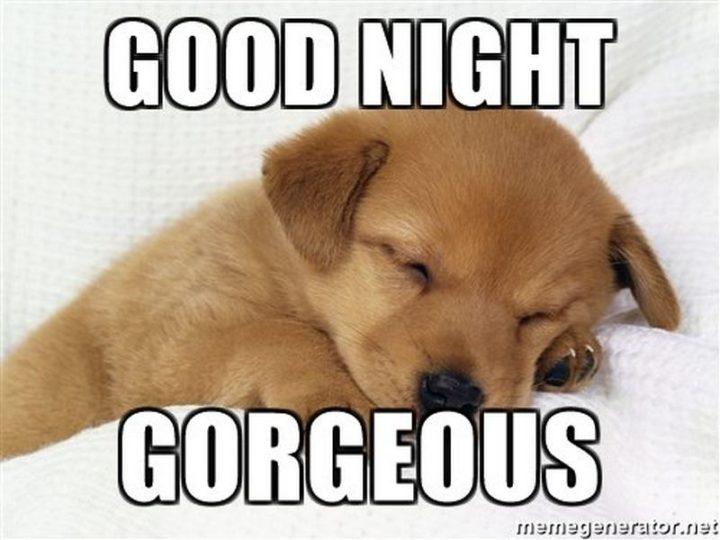 "101 Good Night Memes - ""Good night gorgeous."""