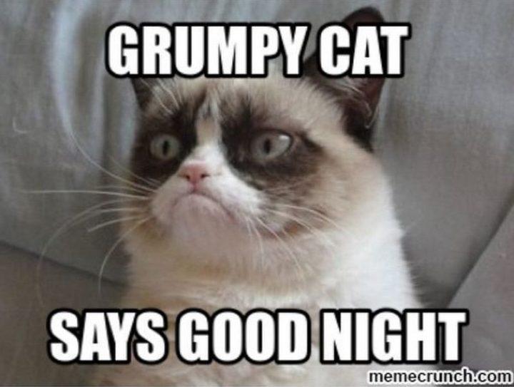 "101 Good Night Memes - ""Grumpy cat says good night."""