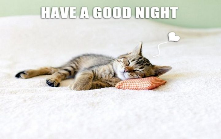 "101 Good Night Memes - ""Have a good night."""