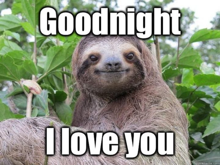 "101 Good Night Memes - ""Goodnight. I love you."""